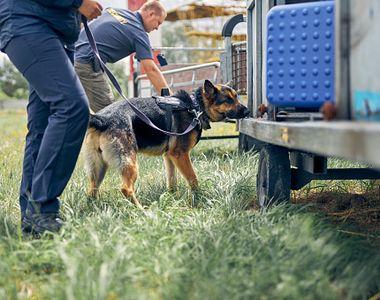 Un bărbat s-a ales cu dosar penal după ce a rănit și sghingiuit un câine