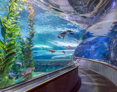 VIDEO | Se va construi un nou acvariu cu pinguini și rechini, la Constanța