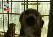 Realitatea crunta de la adapostul de animale din Buftea
