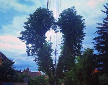 Asta e copacul caruia toata lumea din Sibiu ii face poze! Are forma de inima!