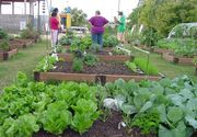 Se cauta romani care sa munceasca la ferme de legume in Franta. Salariu net de 1500 de euro, cazare gratuita