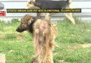 Reportaj uluitor intr-un adapost de caini din Prahova: animalele sunt hranite cu picioare de porc putrezite, beau apa murdara si trag sa moara. Ce este si mai revoltator este atitudinea veterinar