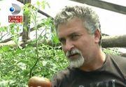 """Un agricultor din Dolj se lauda cu """"rosiile medicinale"""". La ce sunt bune tomatele vindecatoare si cat costa un kilogram"""