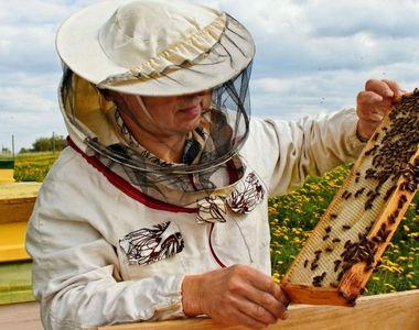 """Ministrul Agriculturii trage un semnal de alarma: """"Apicultorii falsifica mierea!..."""