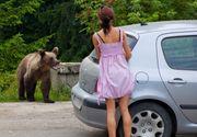 O fetita de 13 ani a ajuns la spital dupa ce a fost ranita de un urs