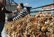 Atentie la ciupercile din piata. Pot fi otravitoare si pot provoca decesul. Sfatul specialistului