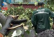 Furtuna a facut dezastru in judetul Gorj. O femeie insarcinata a ajuns la spital dupa ce un copac a cazut peste masina in care se afla