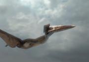 Cel mai mare dinozaur zburător din lume, descoperit in Romania, va fi dezvăluit la Muzeul Antipa