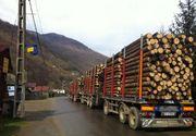 Ministerul Mediului a lansat o aplicatie prin care cetatenii pot verfica daca un transport de lemn este legal. Iata cum functioneaza