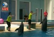 "Misiune indeplinita. Delfinii din Constanta au fost mutati in noul bazin, din noul delfinariu: ""Femelele au iesit la noi si ne-au zambit"""
