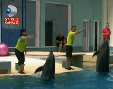 Misiune indeplinita. Delfinii din Constanta au fost mutati in noul bazin, din noul...