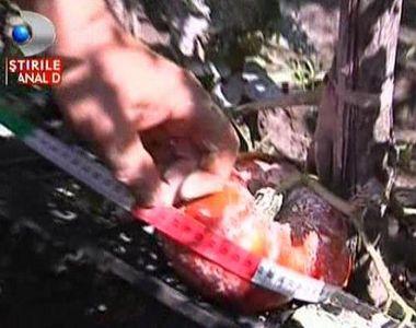 Cum sa faci un borcan de bulion dintr-o singura rosie? Din tomatele lui nea Ioan!...