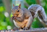 Primaria Bistrita risca o amenda de 50.000 de lei pentru ca le-a facut case prea mici veveritelor din parc! Un biolog s-a revoltat cand a vazut ca animalutele au prea putin spatiu!
