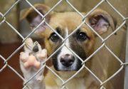 Adăpostul pentru câini comunitari din Câmpina, închis temporar; administratorul cercetat după ce au fost găsite animale moarte