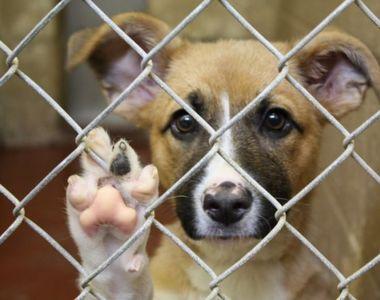 Adăpostul pentru câini comunitari din Câmpina, închis temporar; administratorul...
