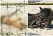 Lagarul de exterminare de la Campina. In acest adapost, cainii sunt lasati sa moara in chinuri. Bolnavi si plini de paraziti, mor pe capete