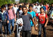 """Angajatorii din Romania vor sa aduca muncitori din afara pentru ca romanii vor salarii mari. """"Cu sirienii va fi mai greu de lucrat pentru că nu cred că fac cârnaţi de porc"""", spun patronii"""