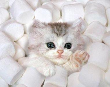 Cercetatorii stiintifici au demonstrat ca pisica te protejeaza de boli foarte grave!...