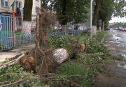 O profesoara de engleza din Aiud a murit dupa ce i-a cazut in cap o creanga desprinsa dintr-un copac!