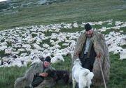 Doi ciobani au fost batuti cu parul pentru ca si-au lasat caii sa pasca la alta stana. Barbatii au murit