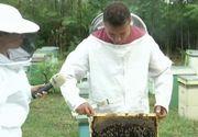 Apicultorii sunt in pragul disperarii. Din cauza secetei, productia de miere de anul acesta este dezastruoasa. Insa asta nu e tot. Mai exista inca o problema