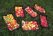 Care sunt produsele autohtone cu cele mai mari urme de pesticide. Le consumi zilnic, dar nu stiai asta despre ele