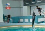 Delfinii au facut spectacol pentru cativa copilasi bolnavi de cancer. Emotii si fericire la Constanta