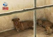 Un inspector al Directiei Sanitar Veterinare castiga 56.028 lei pe an, iar cainii din adaposturile publice traiesc in conditii absolut mizere. Cum reactioneaza autoritatile cand sunt chemate in ajutor