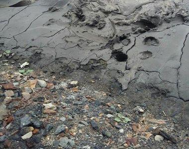 Operatiune dificila de salvare cu final fericit. Trei cai au fost la un pas de a se...