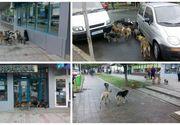 """Orasul din Romania in care cetatenii sunt terorizati de cainii comunitari. """"Alo, domnule primar? Primaria, dormiti?"""" - Oamenii se plang ca singura solutie a oficialilor este otravirea maidanezilor"""