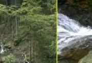 Imagini dezolante pe Valea Moasei, in Muntii Fagaras. Traseul turistic a fost distrus de desfrisarile masive. Potecile au fost distruse, cascadele aproape au disparut, iar raurile sunt impracticabile