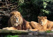 Primul zoo din Romania inscris pe harta mondiala a gradinilor zoologice. Pana in acest an, tara noastra nu exista pe aceasta harta