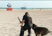 7 caini politisti de rasa isi cauta adapost. Animalele ies la pensie si au nevoie de un camin si multa dragoste