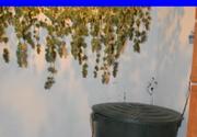Marijuana uscata langa soba de teracota. O adevarata cultura de cannabis, cu sistem de irigare si ventilare a fost descoperita de politistii din Iasi