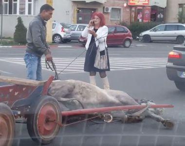 Cruzime fara margini! Un barbat si-a batut cu bestialitate calul care zacea la marginea...