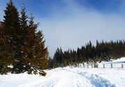 Zapada a inceput sa faca prapad in anumite zone din tara. Copaci cazuti, drumuri inchise si localitati sechestrate