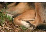 Imagini socante! Un taximetrist a lovit un caine care dormea in fata unui depozit. Martorii spun ca soferul masinii a calcat intentionat animalul