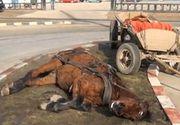 Mobilizare impresionanta azi noapte in Sectorul 5. Un cal a fost salvat de la moarte