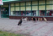 Angajatii primariei din Caracal, acuzati ca au ucis mai multi caini cu furadan