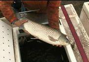 E visul pescarilor! Tone de crap si cosas au ajuns intr-o balta din Galati. Cand vor avea acces amatorii de pescuit