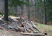 Un copil din Botosani a murit intr-o padure. El plecase cu parintii sa adune lemne