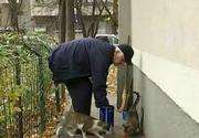 Am scapat de cainii comunitari, dar am fost invadati de pisici. Uite ce se intampla pe strazile din Romania