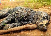 Acest catel a fost lasat sa zaca pe marginea drumului dupa ce a cazut in smoala fierbinte. A fost ignorat de trecatori pana cand s-a intamplat asta. Un miracol i-a salvat viata