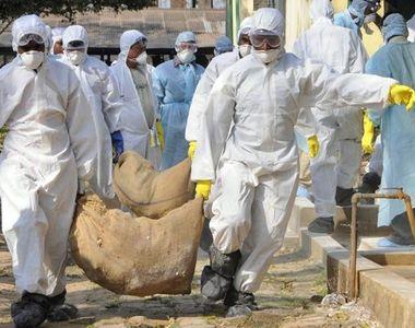 Gripa aviara, confirmata in Romania. ANSVSA a atestat prezenta virusului la un cadavru...