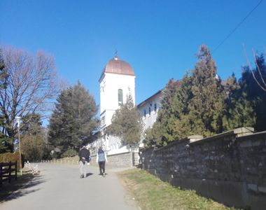 Calugarii de la Cernica vand carne de porc in curtea Manastirii! Costa 10 lei...