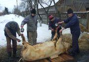 Traditii de Ignat! De ce se taie porcul pe 20 decembrie si ce trebuie sa faci in aceasta zi