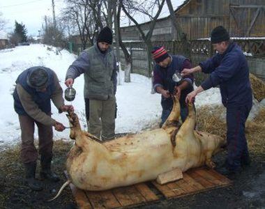 Traditii de Ignat! De ce se taie porcul pe 20 decembrie si ce trebuie sa faci in...