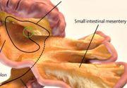 Oamenii de stiinta au descoperit un nou organ uman. Functia lui este mai putin inteleasa