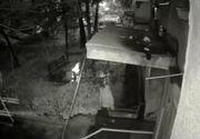 "O batrana din Craiova incendiaza o casuta din carton in care se aflau doua pisicute: ""A spus ca nu suporta mirosul lor"". Imaginile cruzimii"