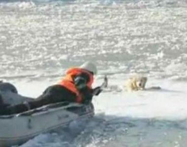 Stirile Kanal D, ora 12.00: Un caine a fost salvat pe ultima suta de metri de pompierii...